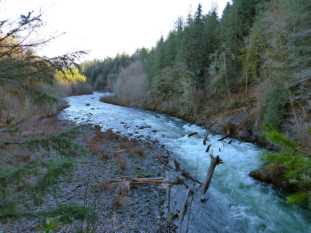 Sandy river and tributaries for Hood river fishing