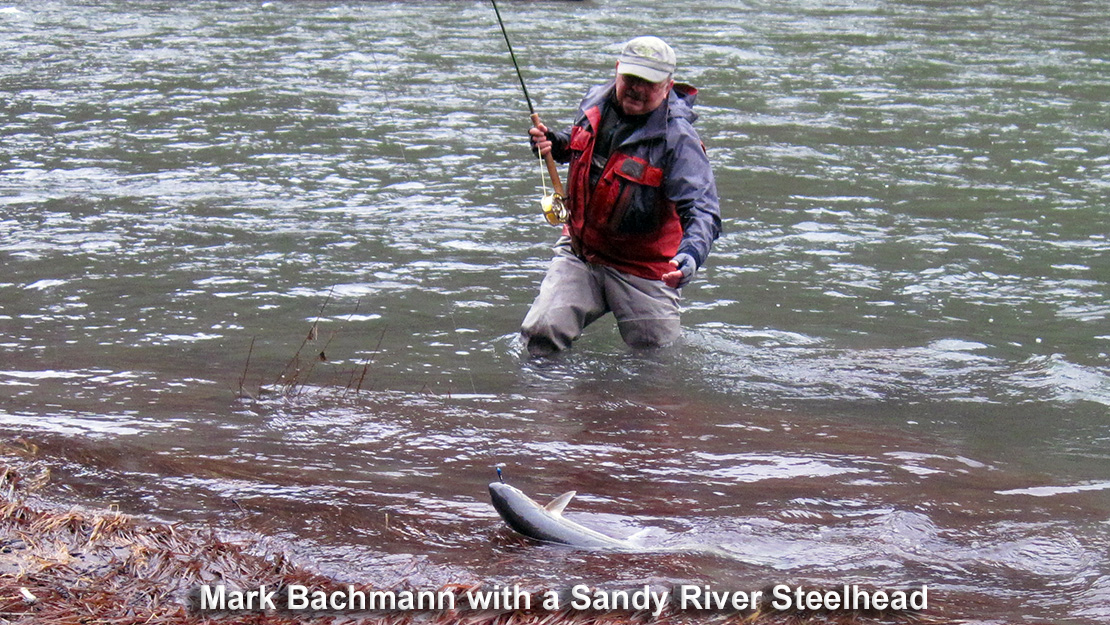 Sandy River Steelhead Guide Mark Bachmann landing a steelhead from the Sandy River in Oregon