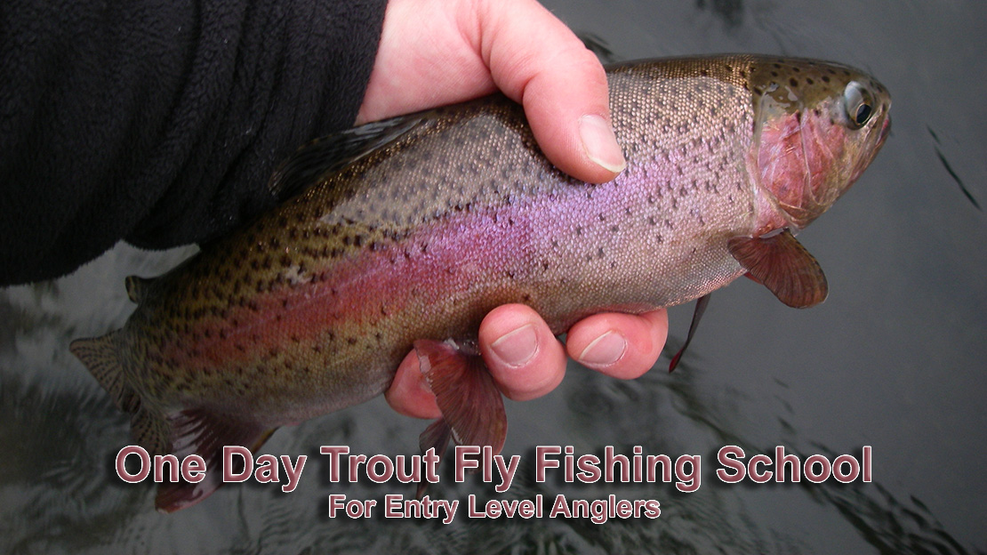 A large rainbow trout caught from one of the tributaries of the Sandy River near Mt, Hood In Oregon