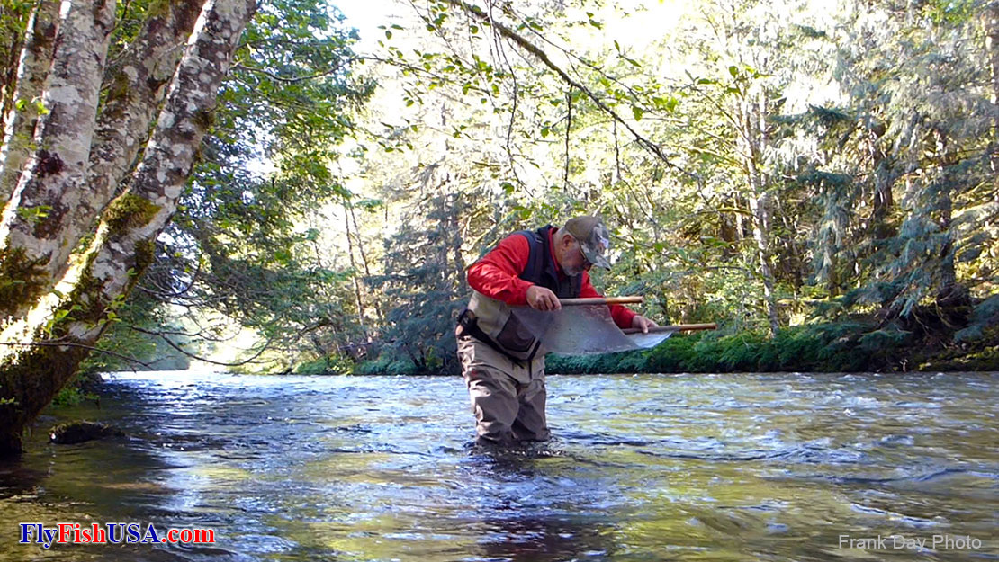 Mark Bachmann doing aquatic entomology research in the Salmon River in the Mt. Hood National Forest.