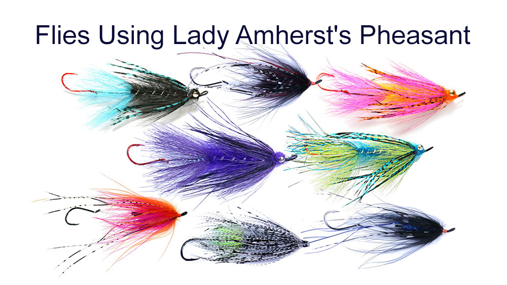Jumbo Lady Amherst Center Tail Feather