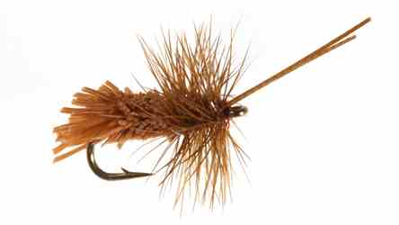 Goddard Caddis, Rusty Goddard Caddis, Rusty