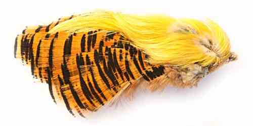 Golden Pheasant Complete Head Golden Pheasant Complete Head