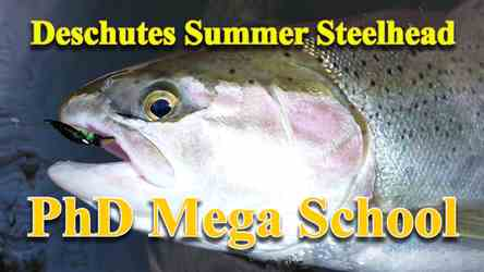 Summer Steelhead PhD Mega School, picture